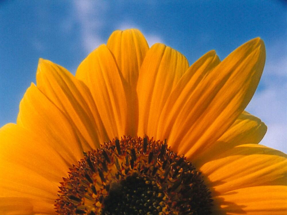 Rising Sun by rachelbee