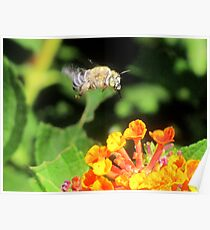 This Bee a Luck Shot! Poster