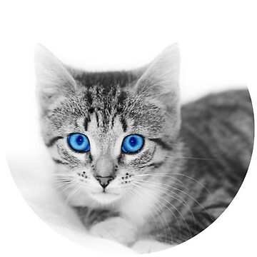 Blue Eyed Kitten by TeeVision