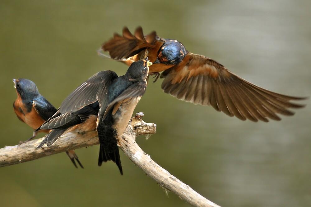 Feeding Swallows by Kenneth Haley