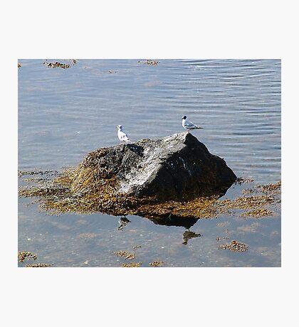Gulls On A Rock Photographic Print