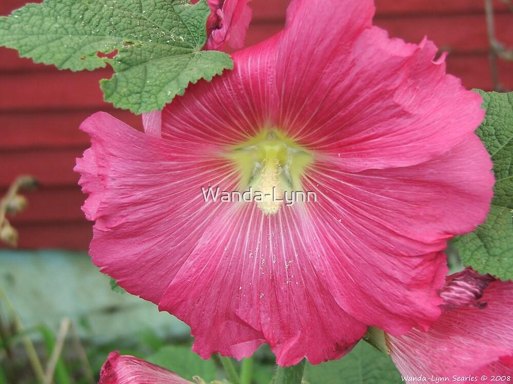 Passionate Pink  by Wanda-Lynn