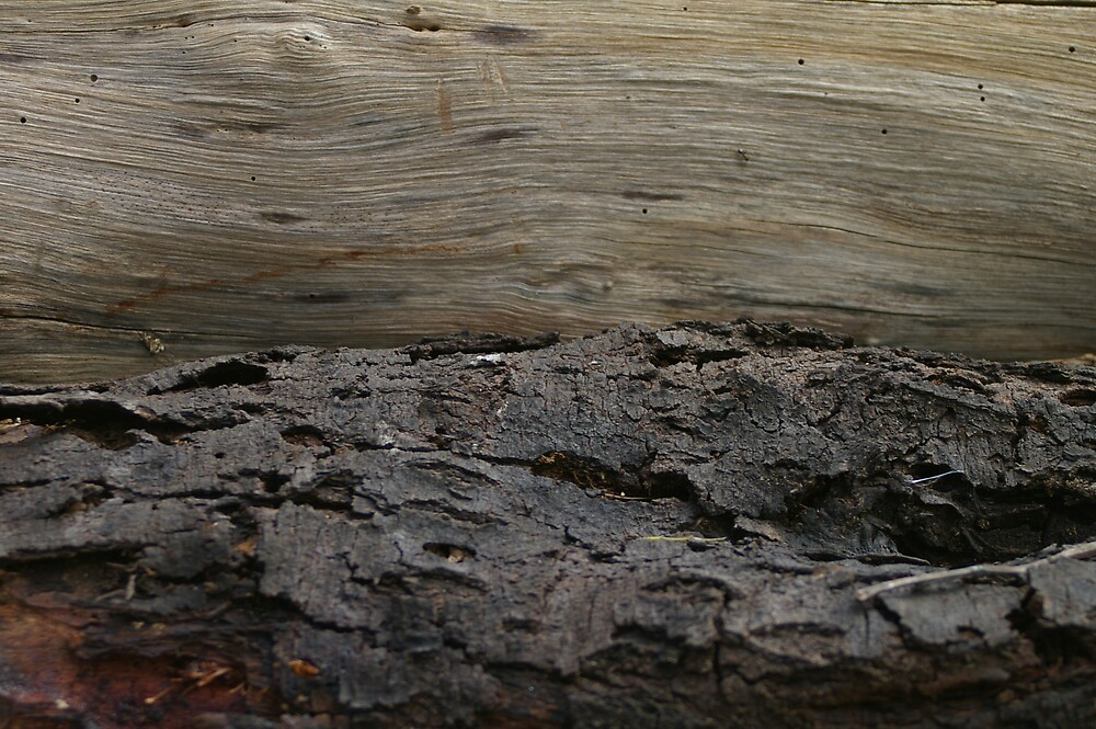 Tree Textures by Bleve