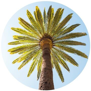 Palm Tree by TeeVision