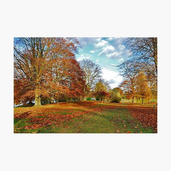 Autumn in Kent (UK) Photographic Print