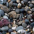 Moss Beach Pebbles by Josef Grosch