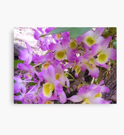 Picture Perfect Orchids  Canvas Print