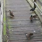 Duck Bridge by Amanda Hunt