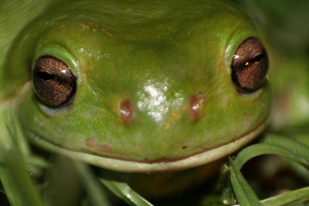 green tree frog by columboola