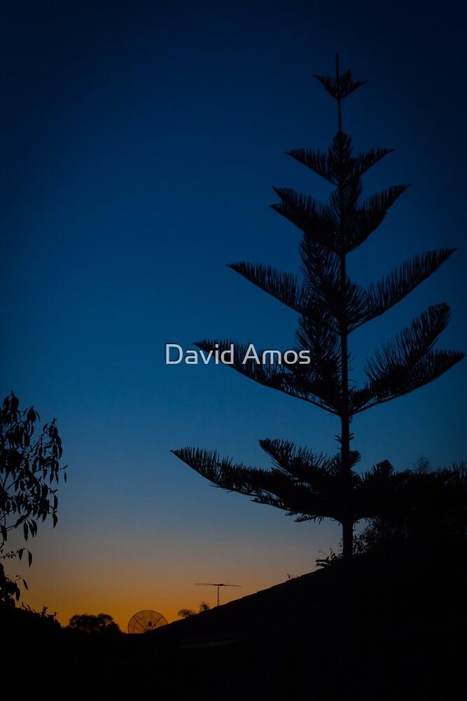 My backyard.. by David Amos