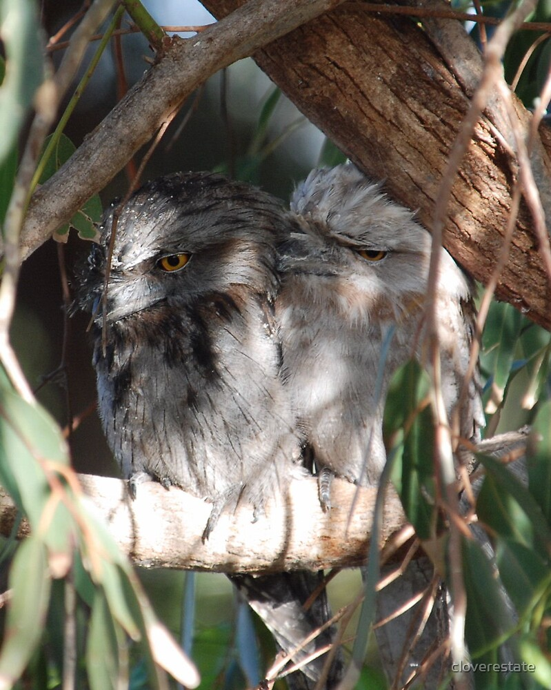 Tawny frogmouth by cloverestate