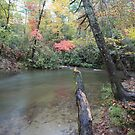 Abrams Creek  by kathy s gillentine