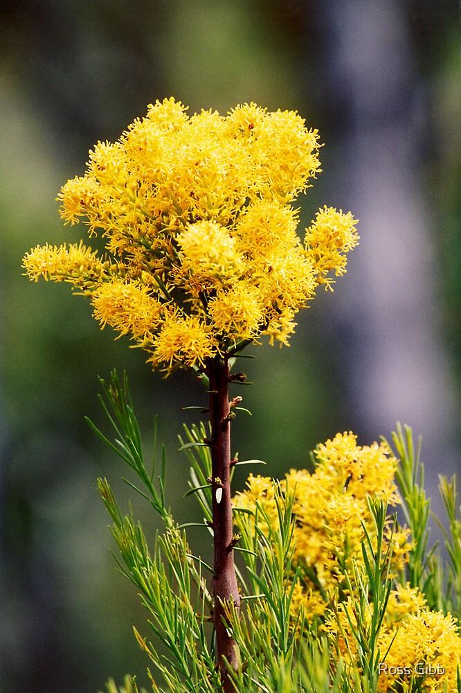 Flower Power by Ross Gibb