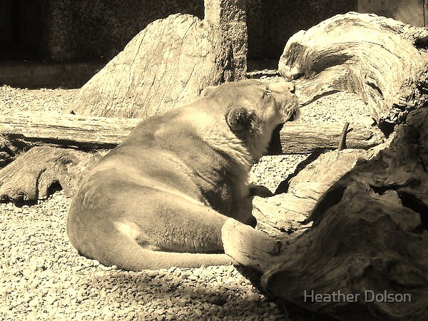 Sleeping Lion by Heather Dolson