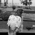 Pigeon´s meeting. Barranco. by ViktoryiaN