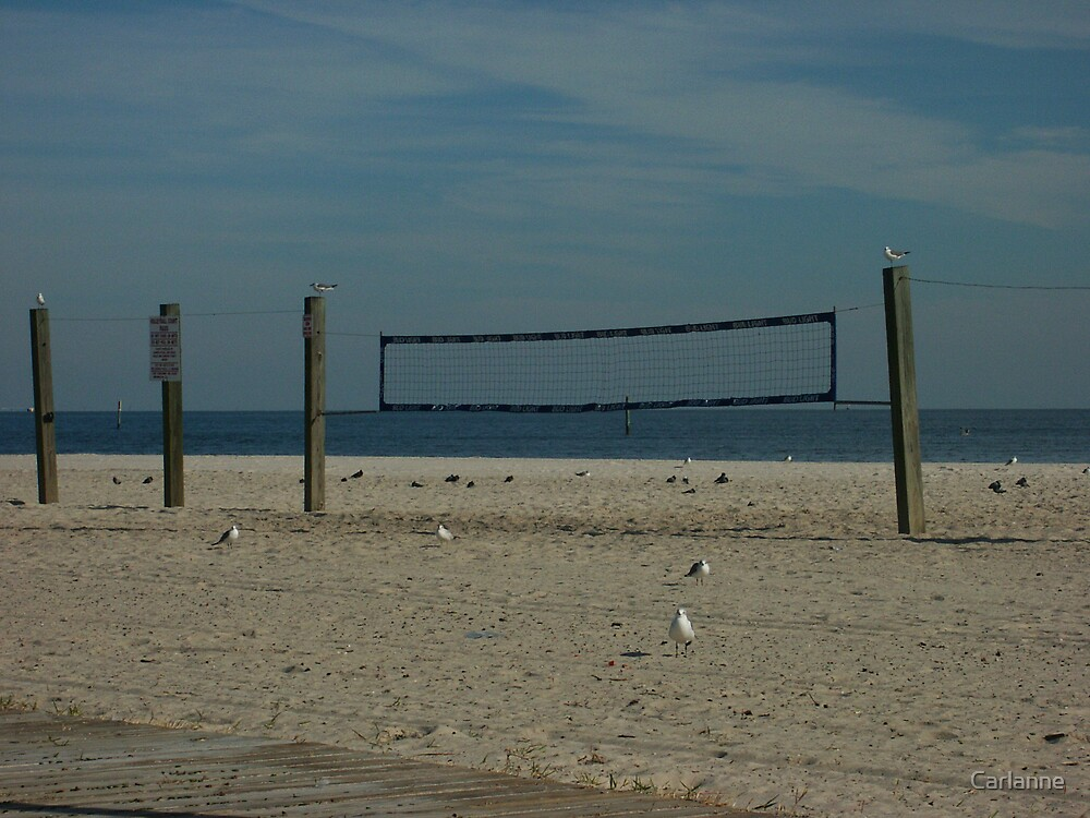 Volleyball is for the birds by Carlanne