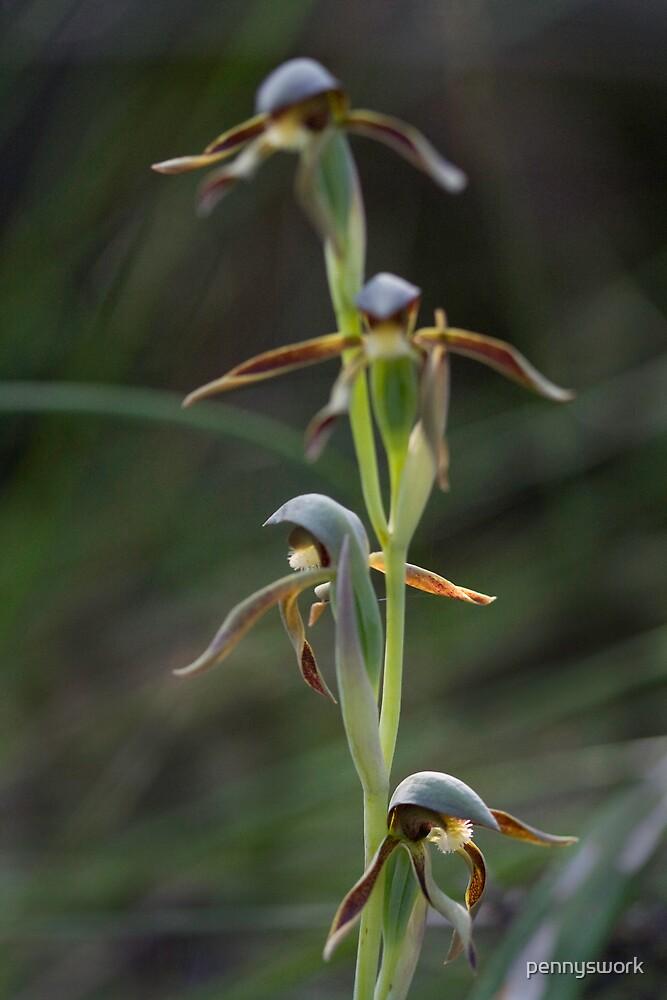 Rattlebeak Orchid by pennyswork