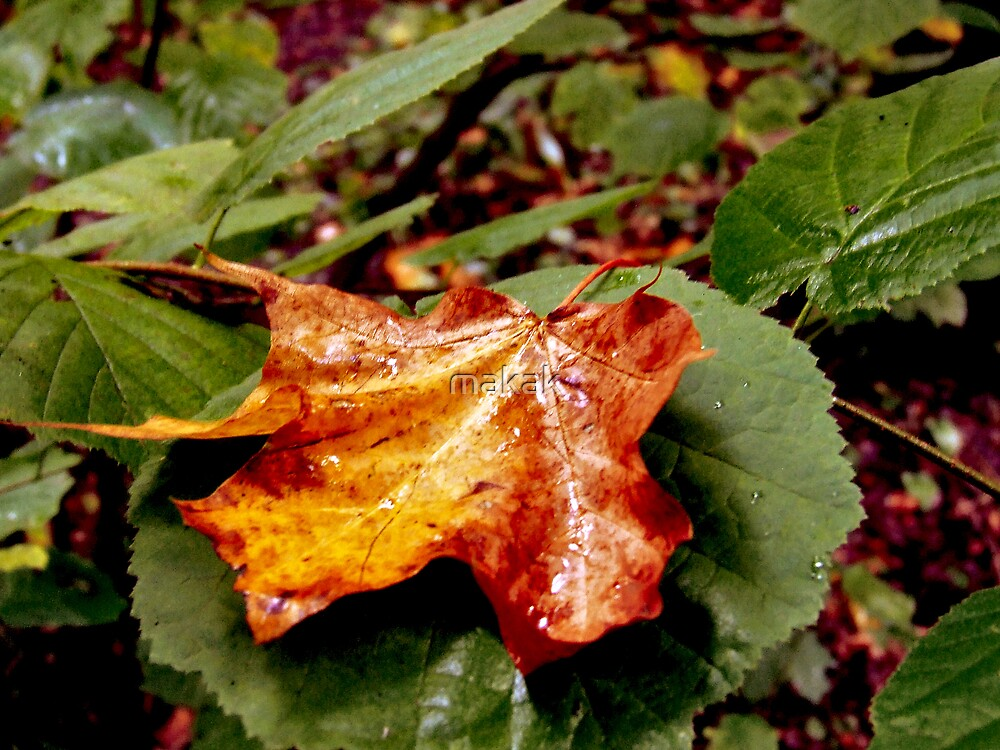 Autumn gold by makak