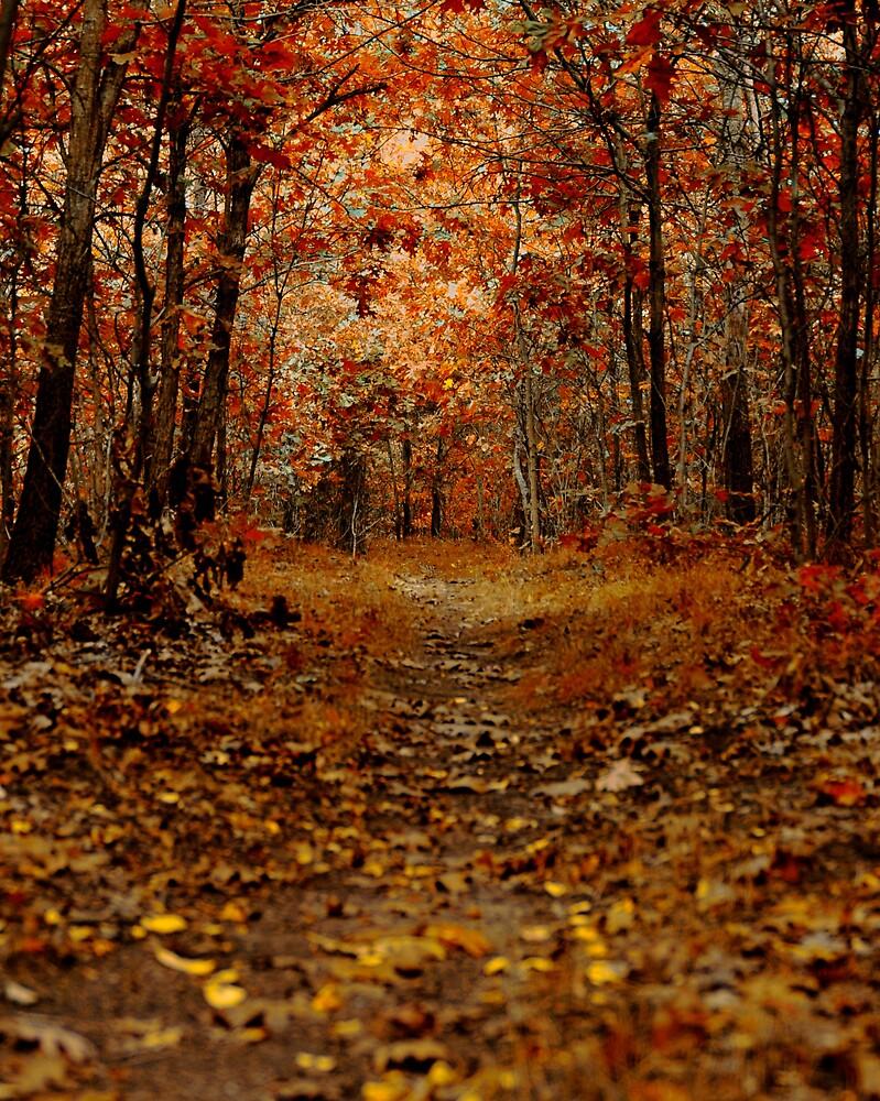 Dream of Fall by Jayson Brazell