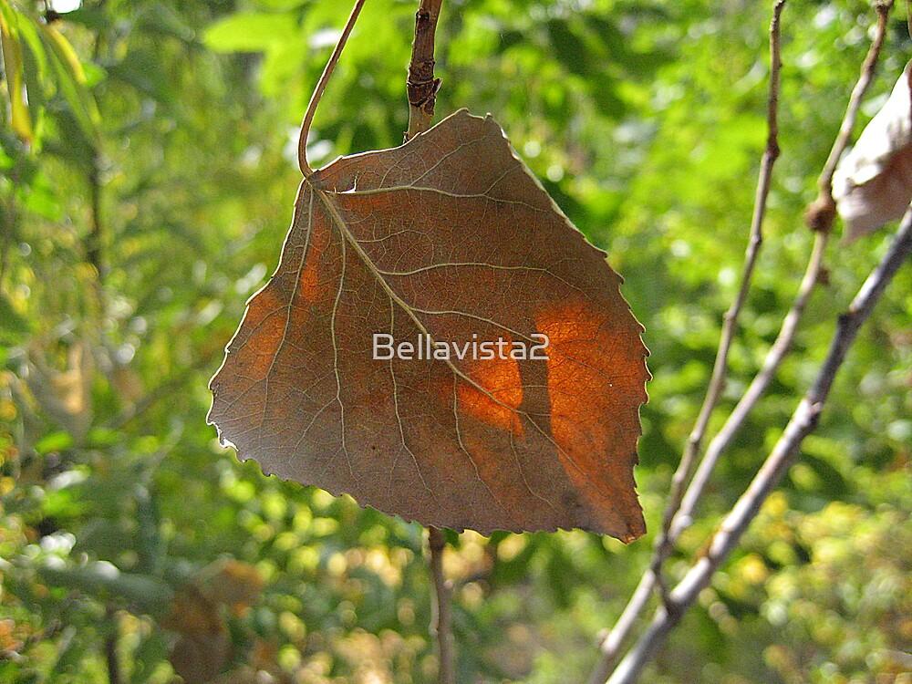 Resilency by Bellavista2