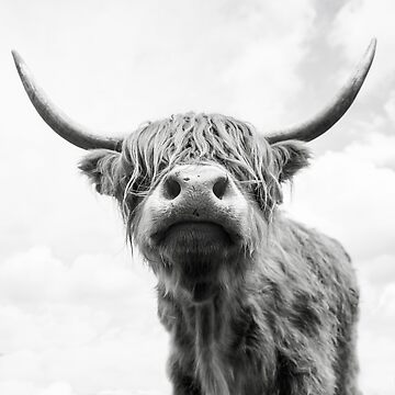 Highland Cow in Black and white by AlfSharp