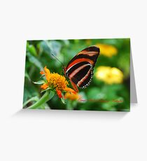 Orange Banded Longwing Butterfly Greeting Card