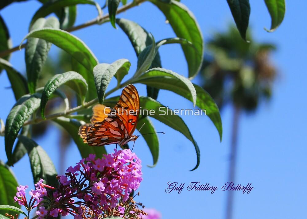 Gulf Fritillary Butterfly in California by Catherine Sherman