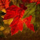 Brilliant Fall Leaves by CarolM