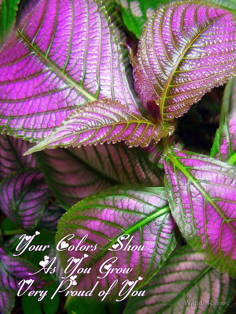 Colours, Colors by Wanda Raines