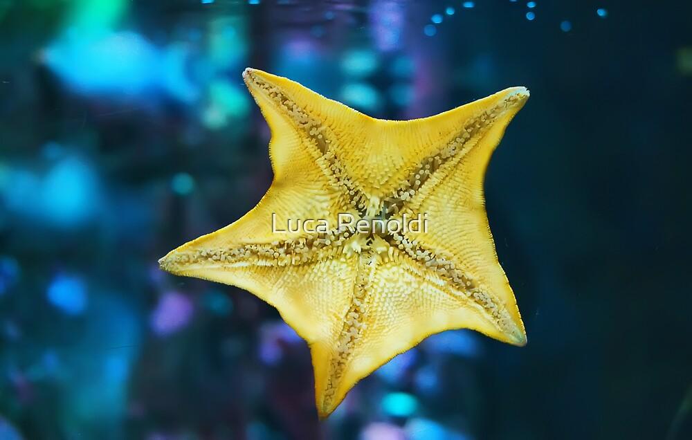 Star by Luca Renoldi