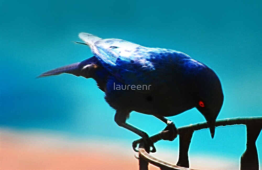A Starling by laureenr