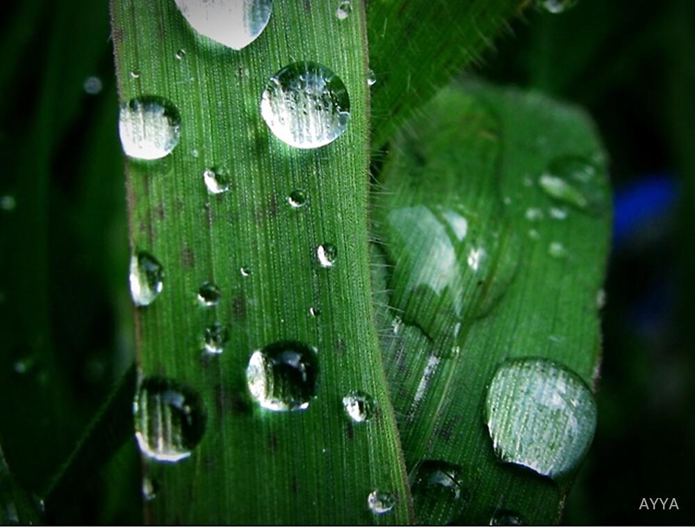 drops of green by AYYA