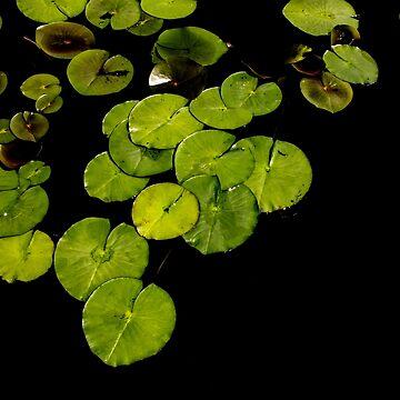 Lily Pond by davesphotoart