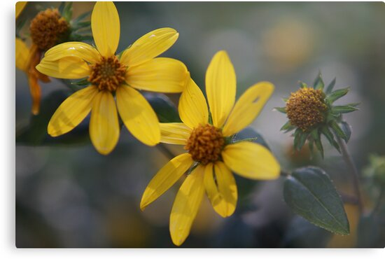Yellow Petals by daytona235