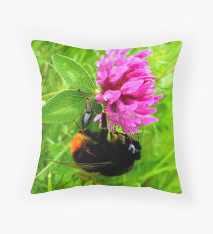 Bumblebee on red clover Throw Pillow