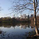 NYC Skyline from Central park  by daytona235