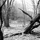 Twisted Woods in NJ by daytona235