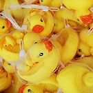 Ducks! by farmbrough