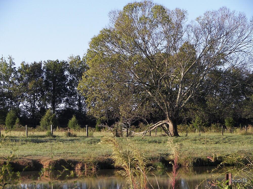 morning reflection by budrfli