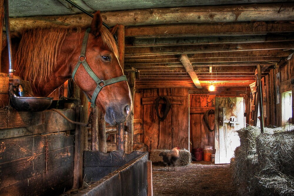 Horse at home by tanmari