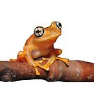 Bright-eyed Frog by MyFrogCroaked