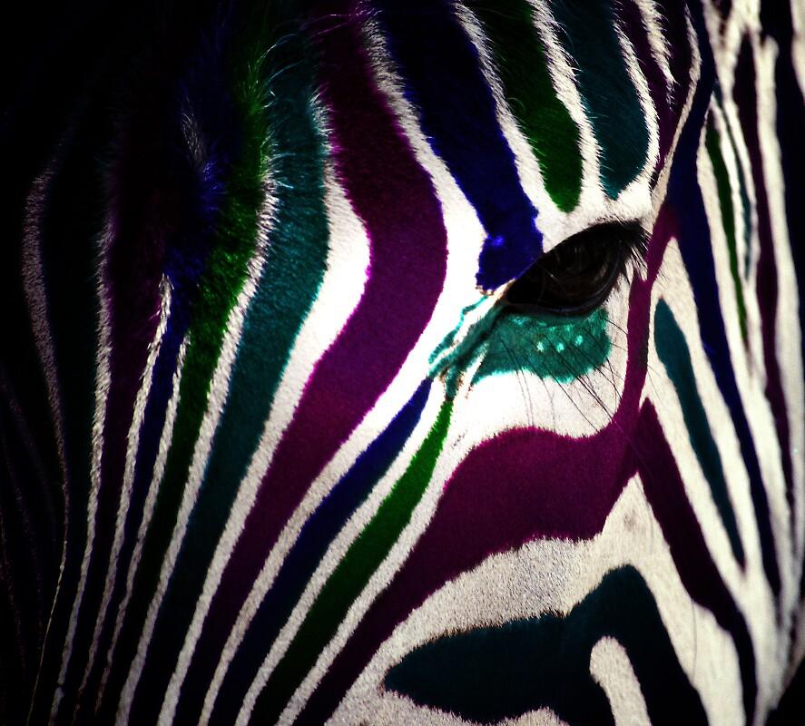 color zebra by alineB