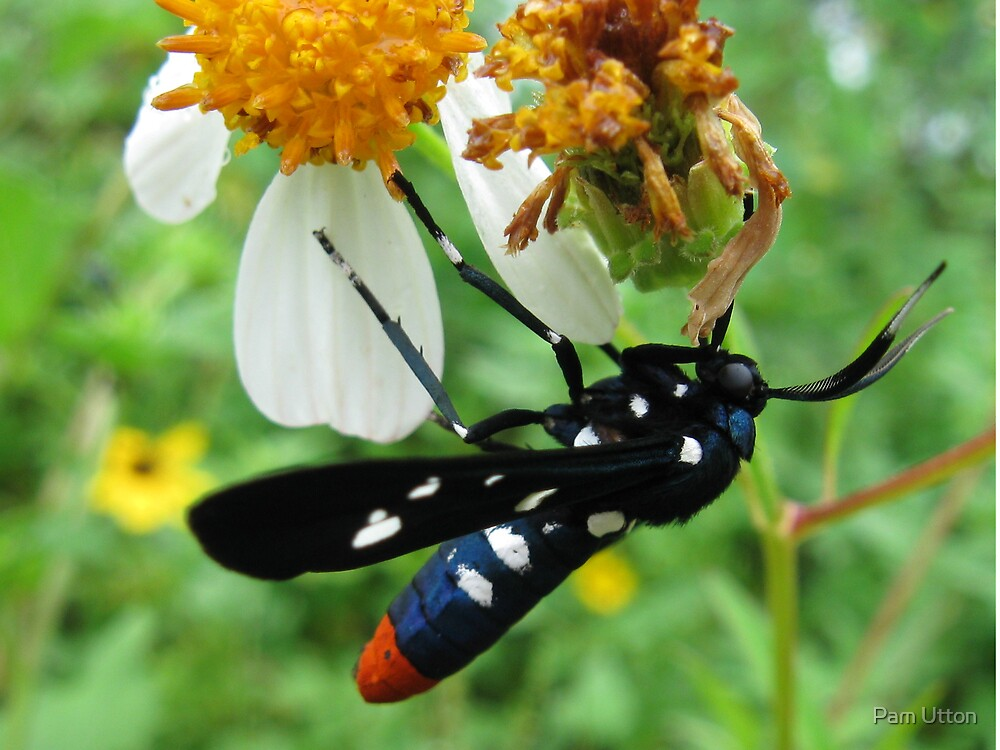 red white and blue bug! by Pam Utton
