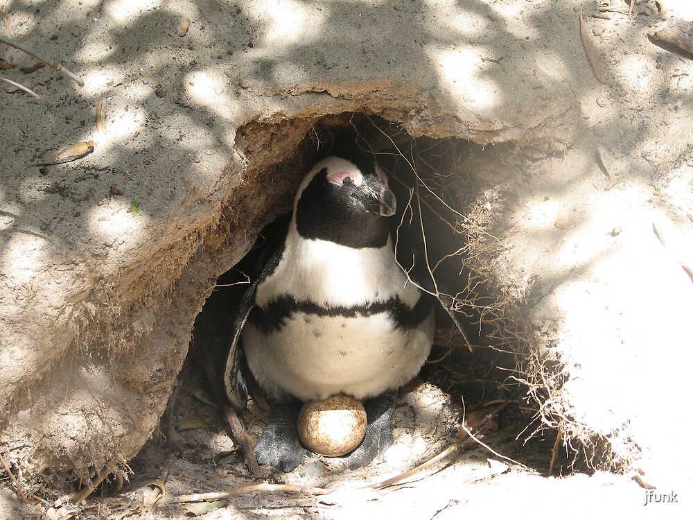 Mother Penguin by jfunk
