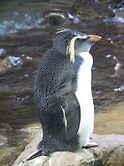 Penguin Profile by jfunk