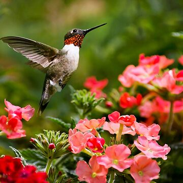 Graceful Hummingbird by rollosphotos