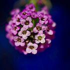 Pretty petals  by Helen  Kelly
