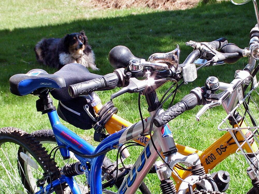 Buddy guards Ed and Den's bikes  by Edward Henzi