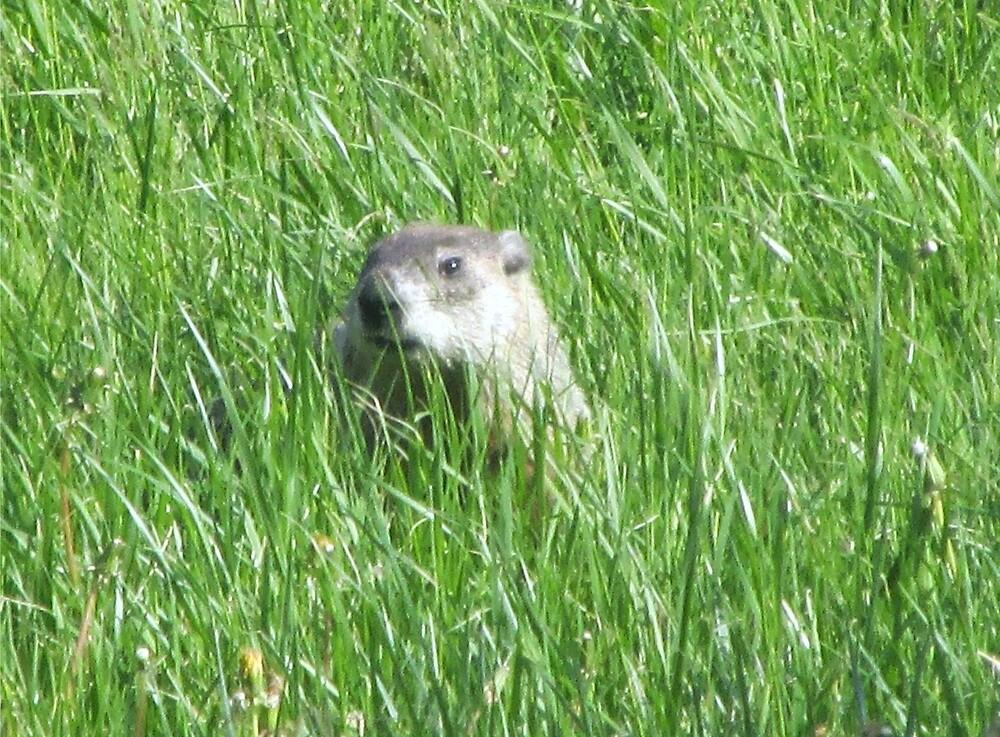 Groundhog Day by vkrivak