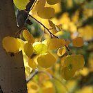 Looks like it's autumn in Utah by gail anderson